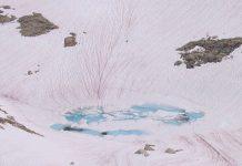 Neve cor-de-rosa no Ártico