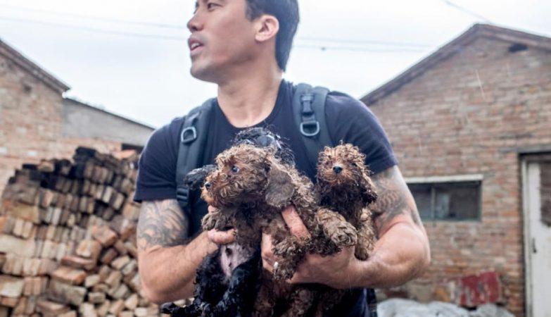 Marc Ching, ativista americano que luta pelos direitos dos animais