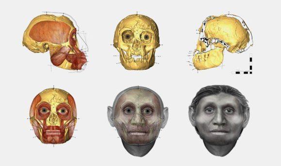 Reconstrução do crânio do hobbit a partir dos restos fósseis encontrados na ilha das Flores