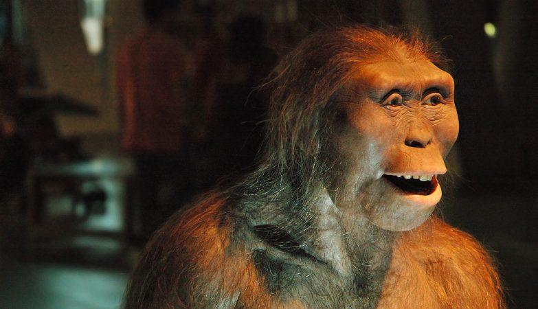 Lucy, uma Australopithecus Afarensis que viveu há 3 milhões de anos