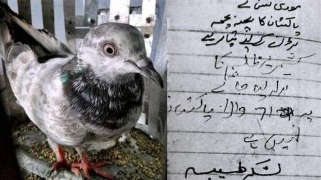 Um pombo capturado na Índia trazia uma mensagem ameaçadora e está sob custódia da polícia por suspeita de espionagem