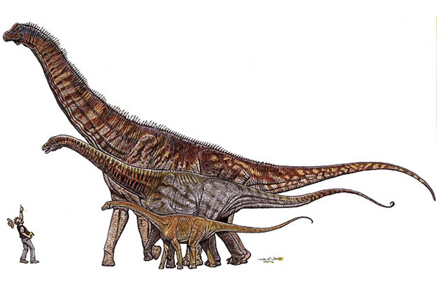 Comparação entre os dinossauros encontrados no Brasil do menor ao maior: Gondwanatitan faustoi (8 metros), Maxakalisaurus topai (13 metros) e Austroposeidon magnificus (25 metros).