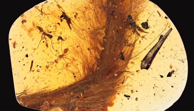 A cauda de dinossauro preservada em âmbar