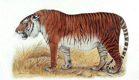 Reconstituição artística do Tigre-do-Cáspio