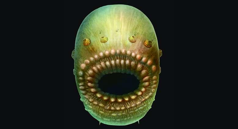 Uma reconstrução do que seria o Saccorhytus a partir dos fósseis encontrados
