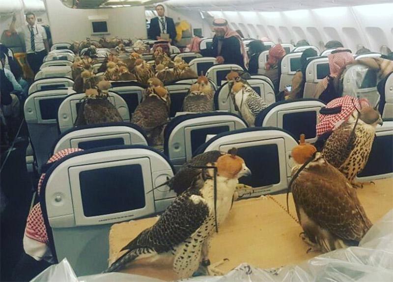 Falcões num avião