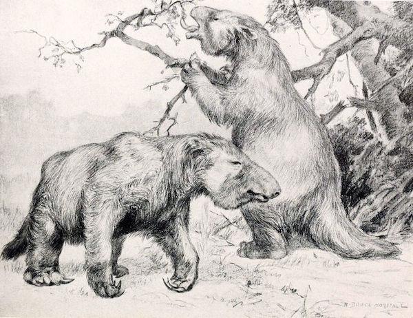 """Megatherium americanum, a """"besta gigante"""""""