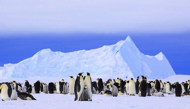 Os pinguins-imperadores (Aptenodytes forsteri) agrupam-se para suportar o frio