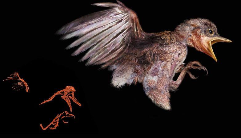 Reconstrução do pássaro com 100 milhões de anos