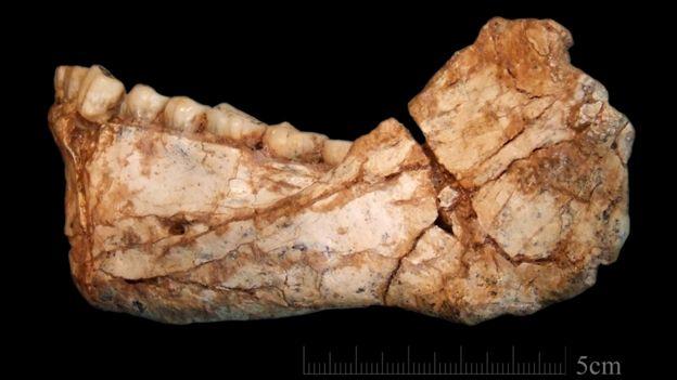 Mandíbula inferior de um Homo sapiens encontrado em Jebel Irhoud