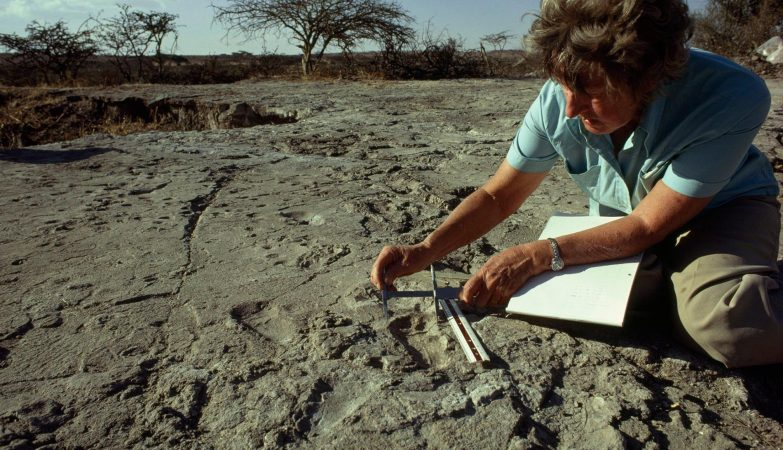 As pegadas milenares de Laetoli foram descobertas por uma equipa liderada pela arquóloga Mary Leakey - aqui, fotografada em 1979 pela National Geographic junto às famosas marcas