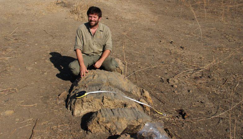 O português Ricardo Araújo e dois paleontólogos moçambicanos anunciaram a descoberta da mais extensa floresta fossilizada do continente africano