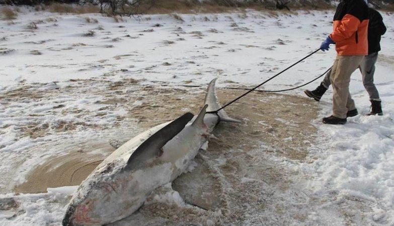 Vaga de frio bate recordes e congela tubarões nos EUA