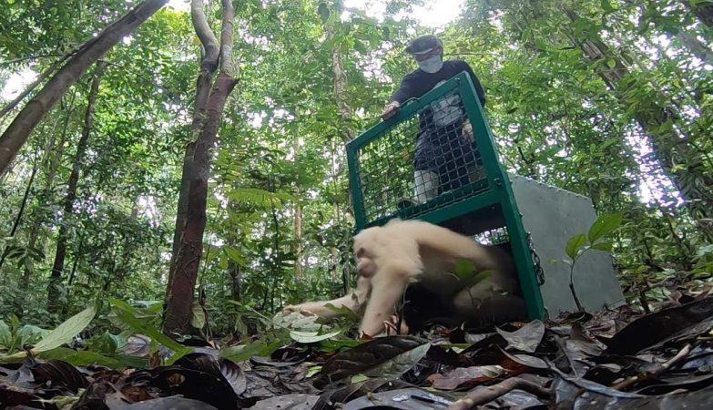 Perda de habitat pode aumentar doenças que passam de animais para humanos, prevê ONU