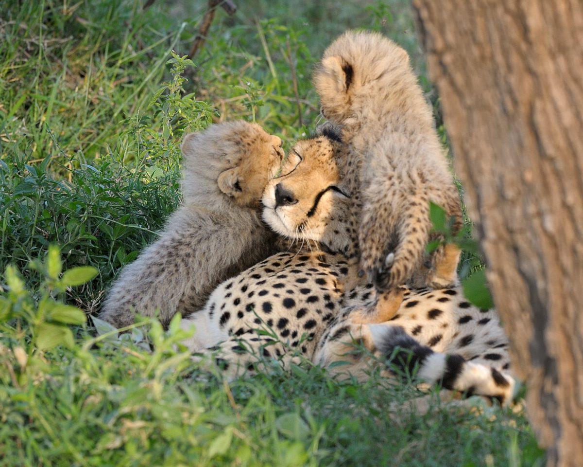 Картинки животных заботливых мам