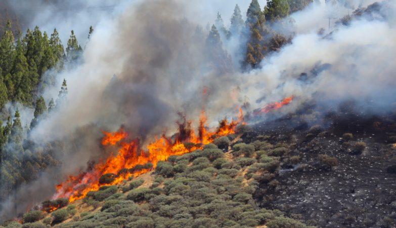Temperaturas sobem. Mais de 20 concelhos em risco elevado de incêndio