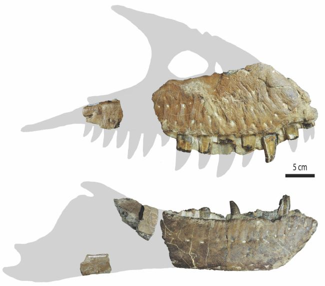New Tyrannosaurus Species Discovered in Canada