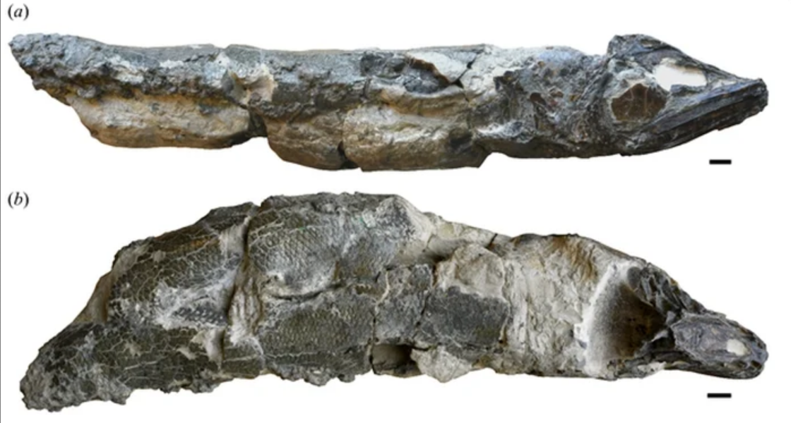 Scientists have discovered the (scary) anchovies of prehistoric times