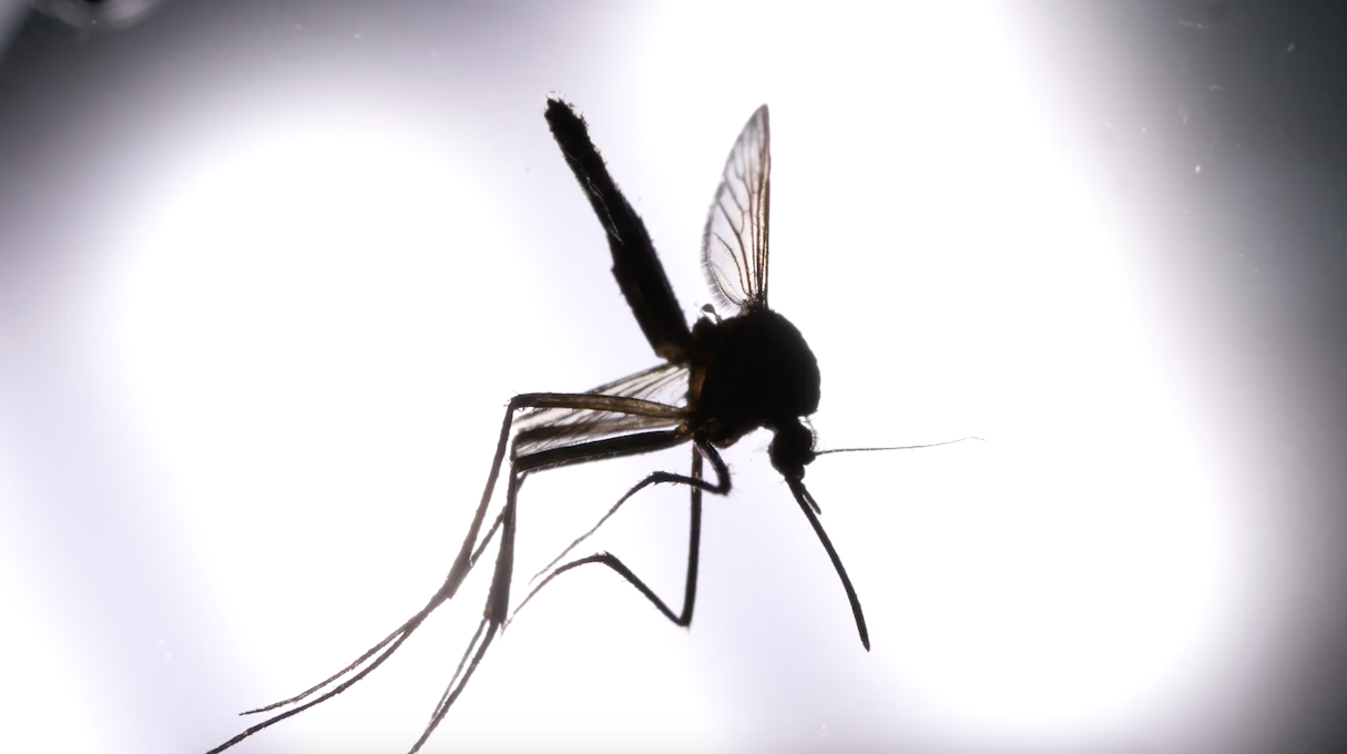 Drones are increasingly like mosquitoes (at least, detecting ...