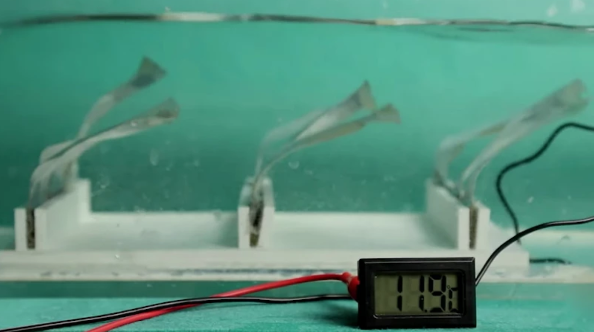 Trio de nanogeradores triboelétricos alimenta um termómetro digital